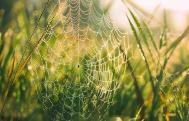 peur des araign-es