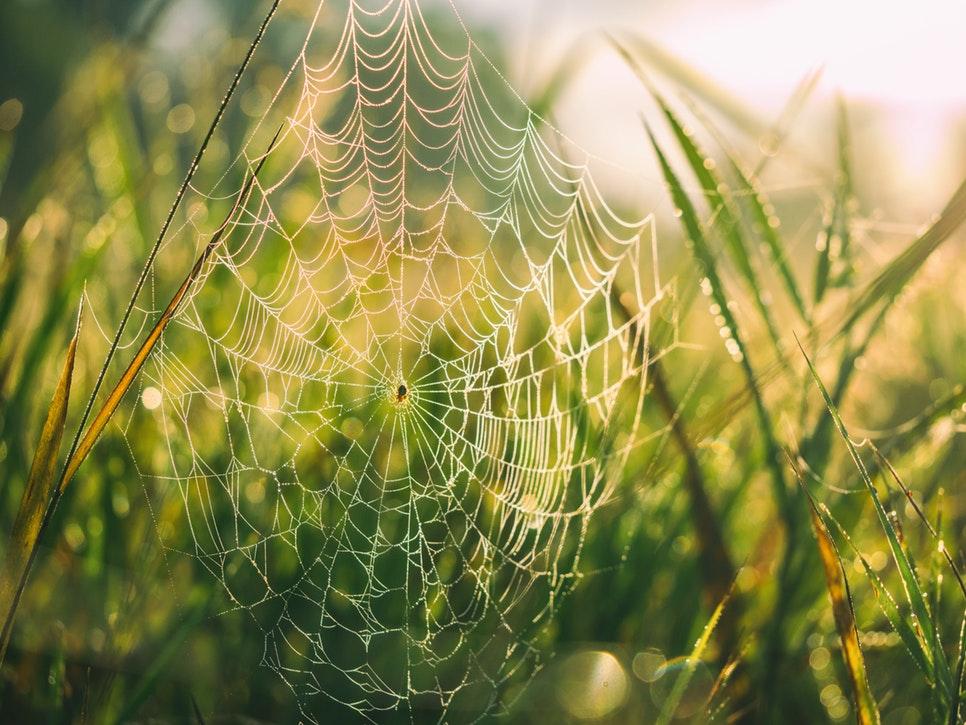La peur des araignées