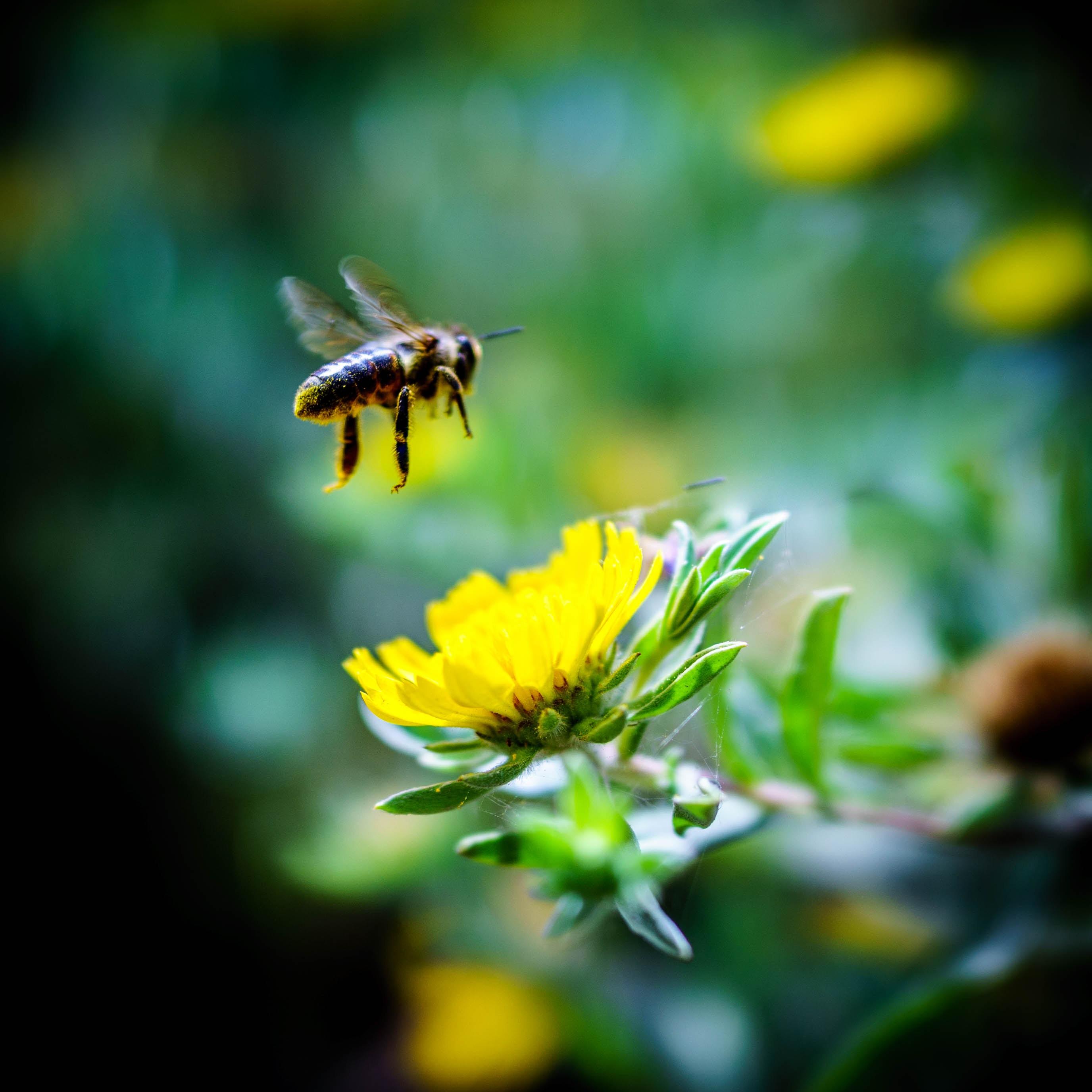 Pourquoi est-ce que les abeilles m'angoissent tant ?