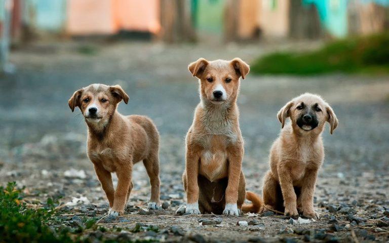 Peur des chiens, des chats ou d'autres animaux