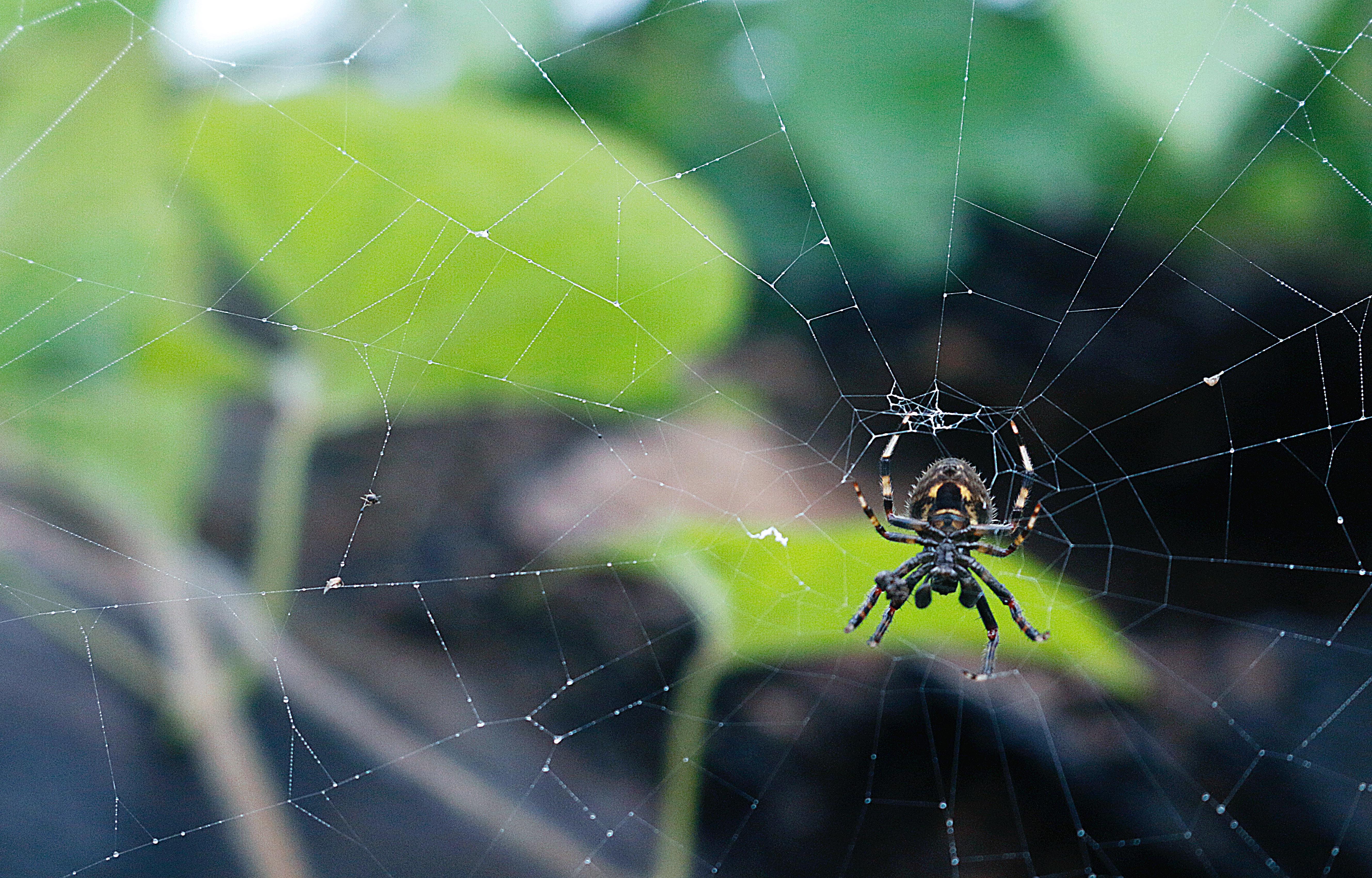 Arachnophobie, la peur des araignées