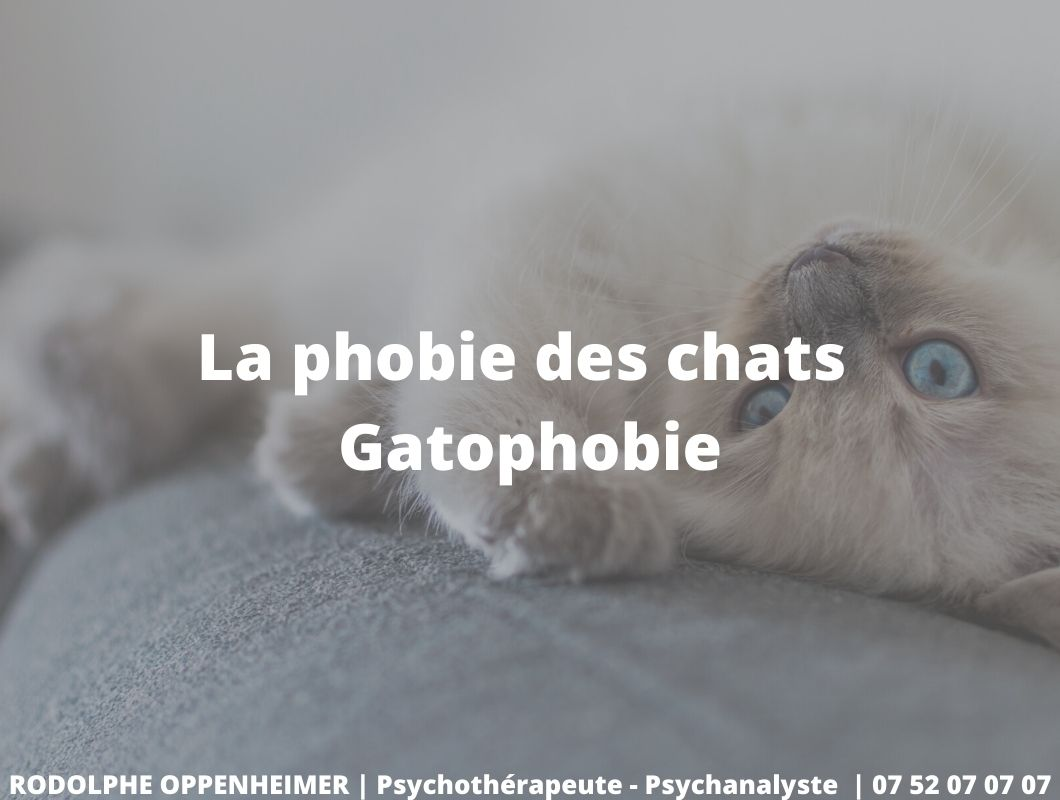 La phobie des chats – Gatophobie